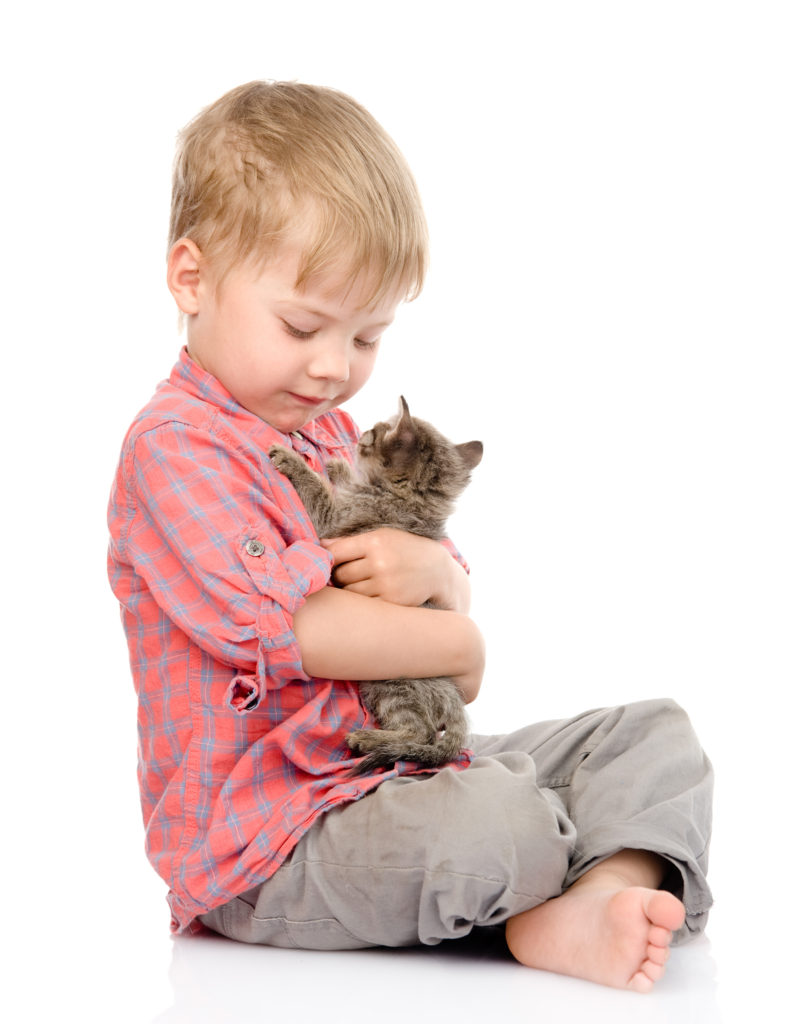 child hugging a kitten. isolated on white background